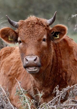 szkody wyrządzone przez zwierzęta gospodarskie